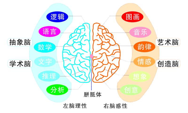 数学大脑结构图